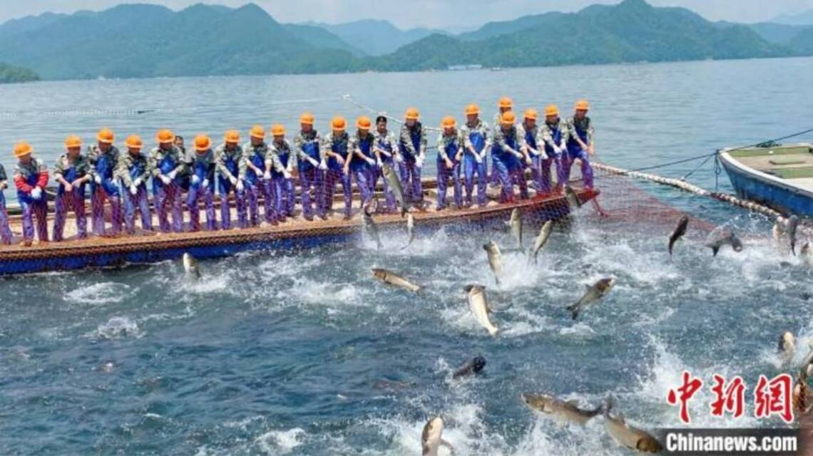 浙江千島湖再現巨網捕魚   萬魚齊躍盛況