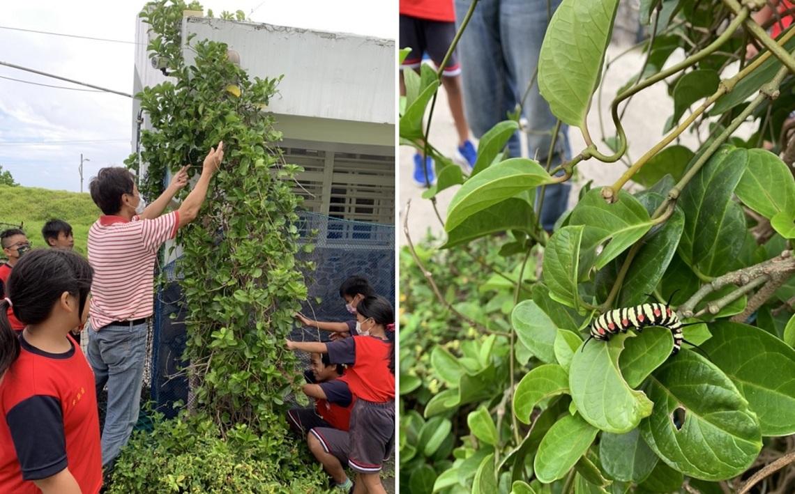 臺灣寶珠計畫生態志工  前進蘭嶼兩所國小扎根教育