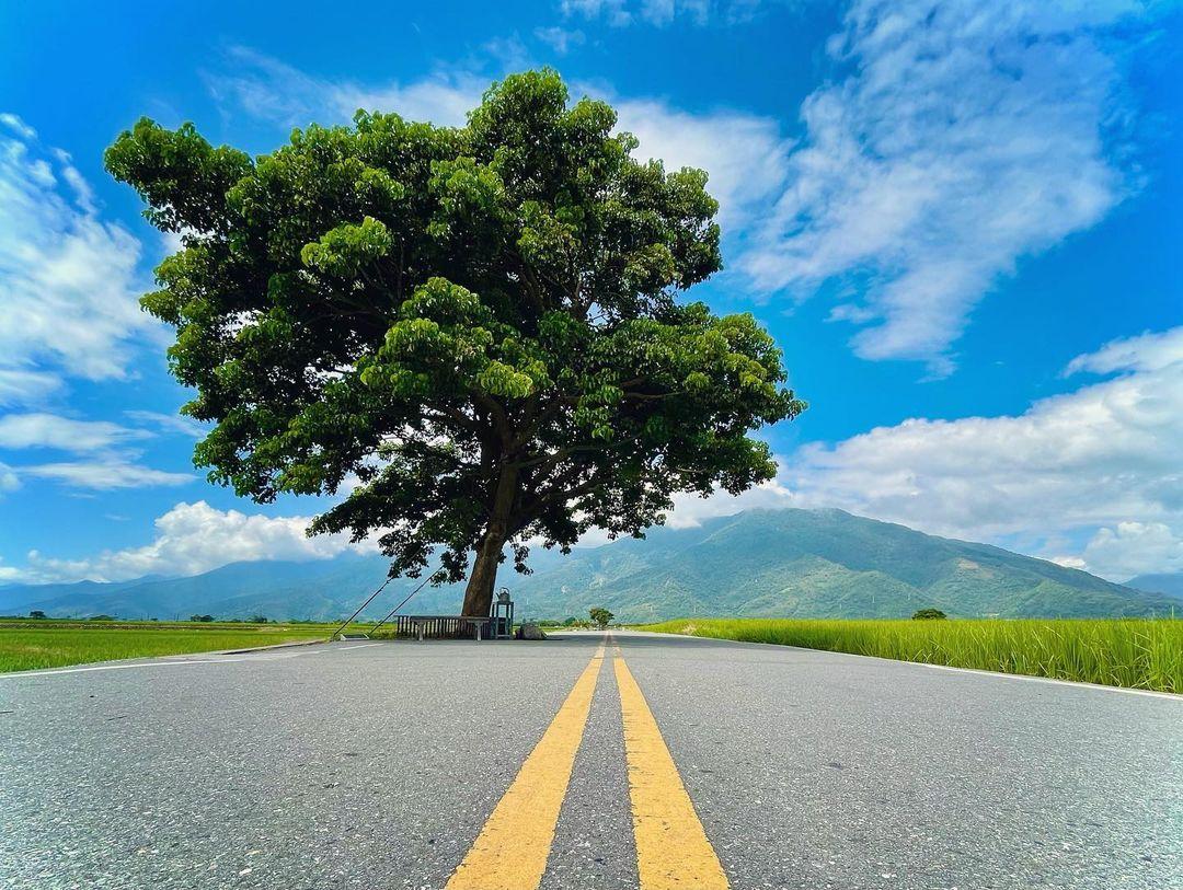 Bosenxchia 金城武樹