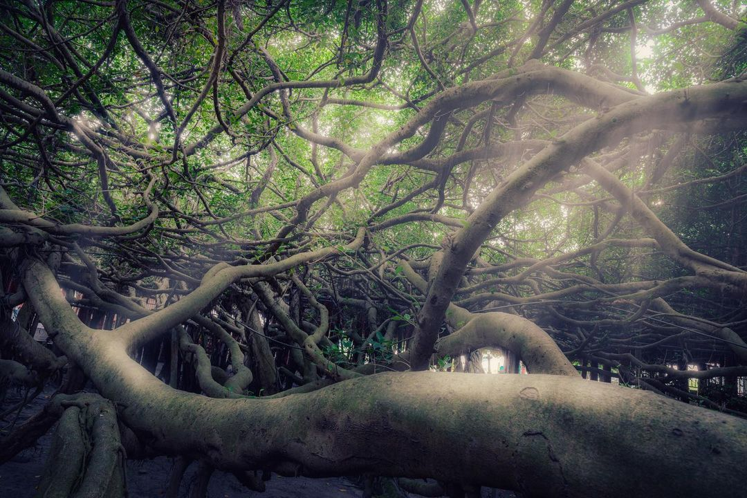 盤點全台奇特樹木美景 欣賞奇樹拍出夢幻美照,附加周邊推薦旅宿!安排一場美「樹」之旅吧!