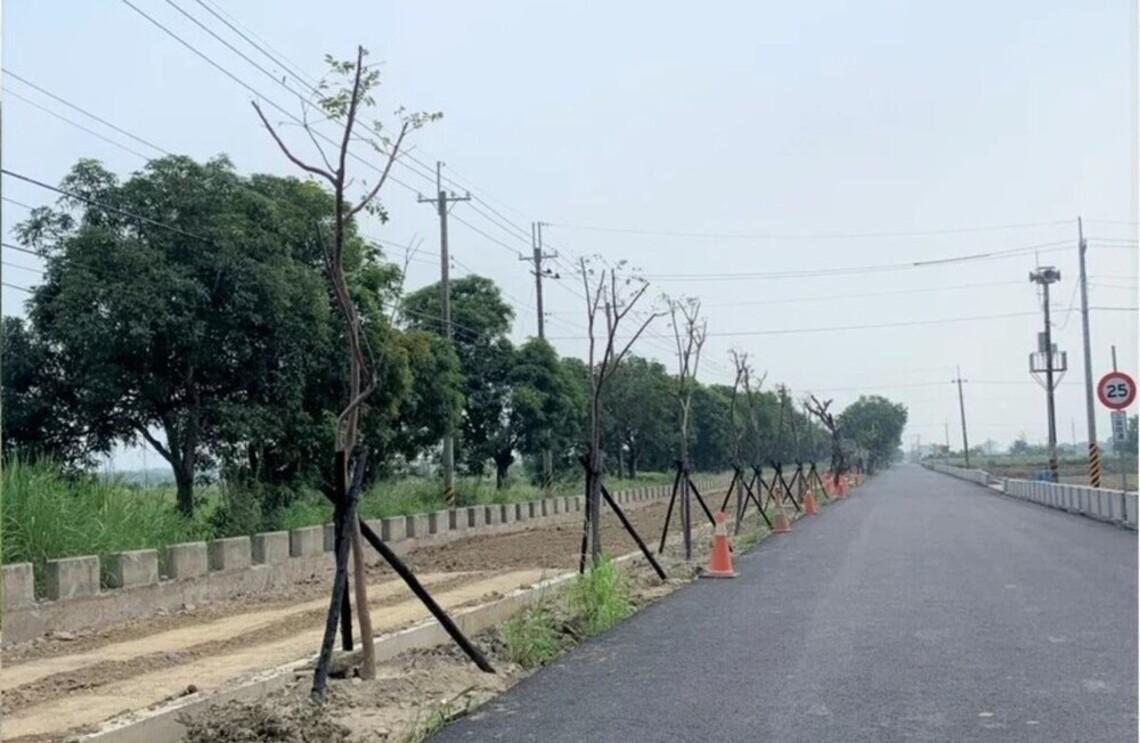 台南新化移植25芒果樹枯死開罰